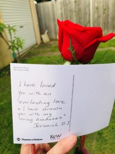 rose-and-card
